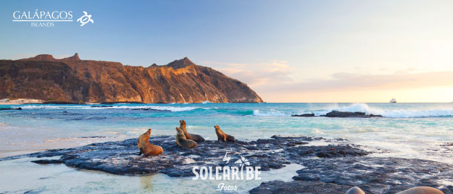 Santa Cruz + Tour de Bahía Temporada Baja