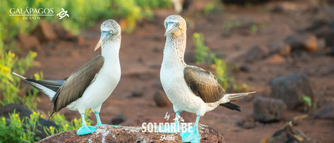 Galapagos 04